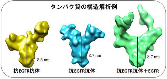 トモグラフィー法によるタンパク質構造解析サービス(沖縄プロテイントモグラフィー株式会社)