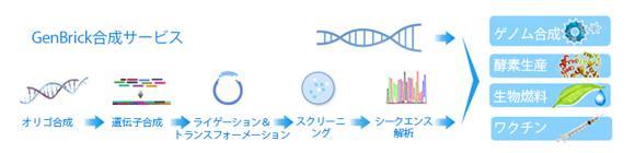 人工遺伝子合成サービス GenBrick™ 遺伝子合成