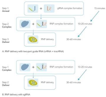 Alt-R® CRISPR-Cas9 System