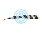 "Trueflight Feathers 5"" Shield RW Barred"