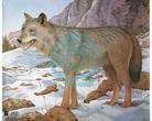 JVD Animal Face Wolf