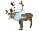 Delta McKenzie Target 3D Pinnacle Series Caribou