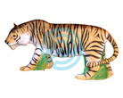 Eleven Target 3D Tiger with Insert