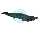 Rinehart Target 3D Alligator UPS