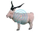Rinehart Target 3D Catalina Goat
