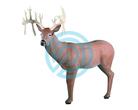 Rinehart Target 3D 30 Point Buck