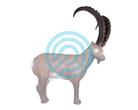 Eleven Target 3D Ibex  Horns