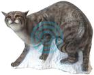 SRT Target 3D Walking Wildcat