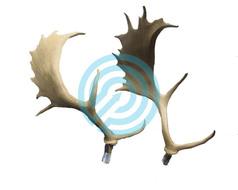 SRT Target 3D Replacement Deer Antler