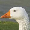 Quick Tutorial: Flatten Nested JSON in Pandas | Kaggle