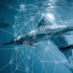 Network Analysis For Dummies Stackoverflow Data | Kaggle