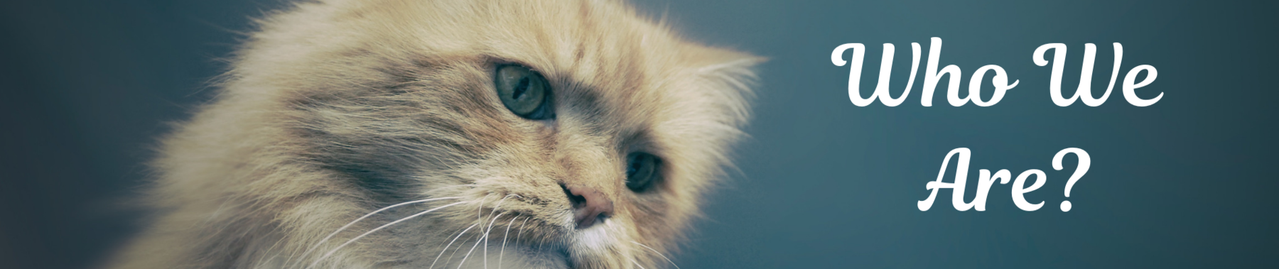 Cats and Dogs Breeds Classification Oxford Dataset | Kaggle