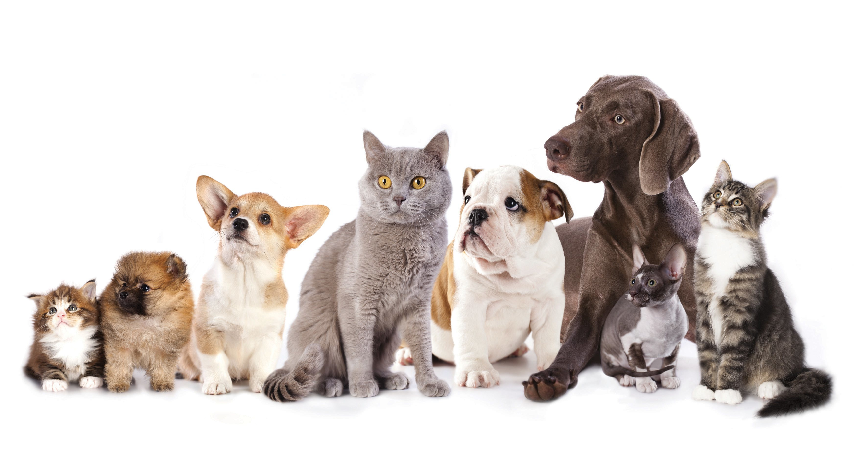 Cute Cats and Dogs from Pixabay com   Kaggle