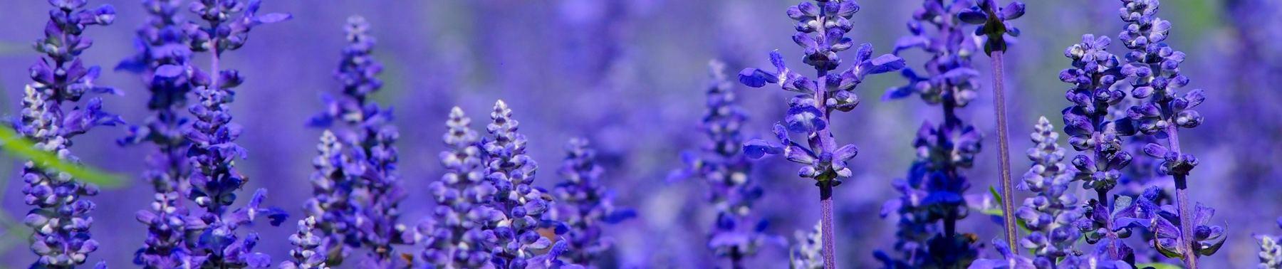 Iris Flower Dataset | Kaggle