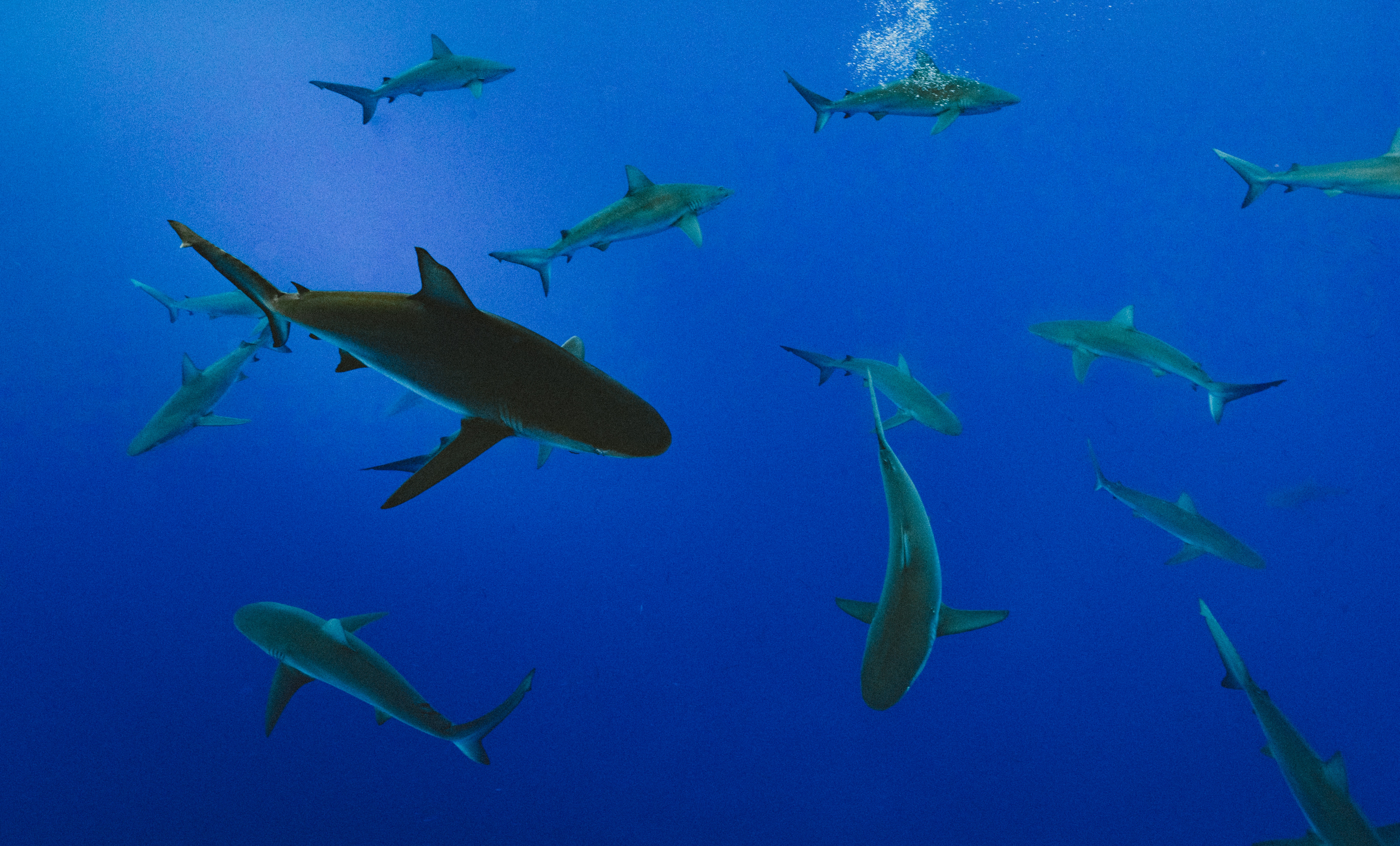 All sharks jumped in - Entrepreneurs and Pitches that