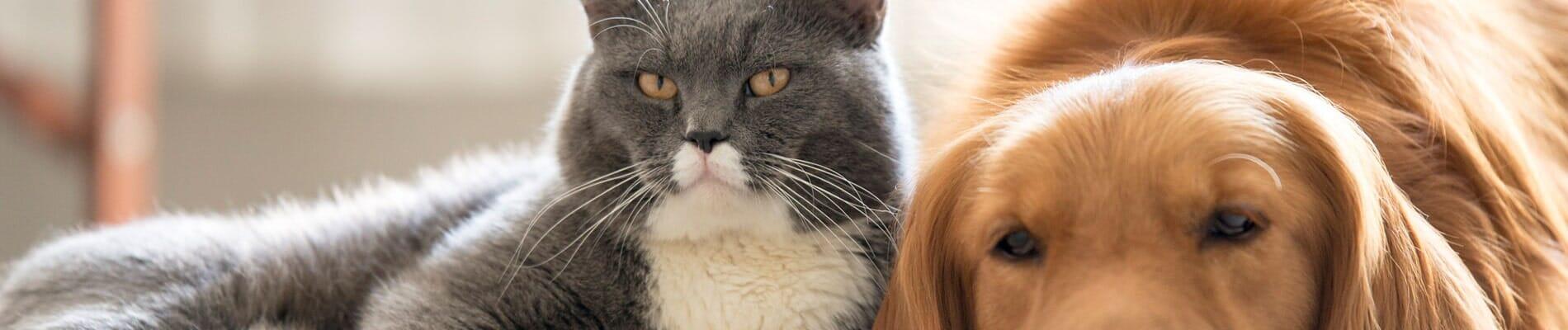Cat and Dog   Kaggle