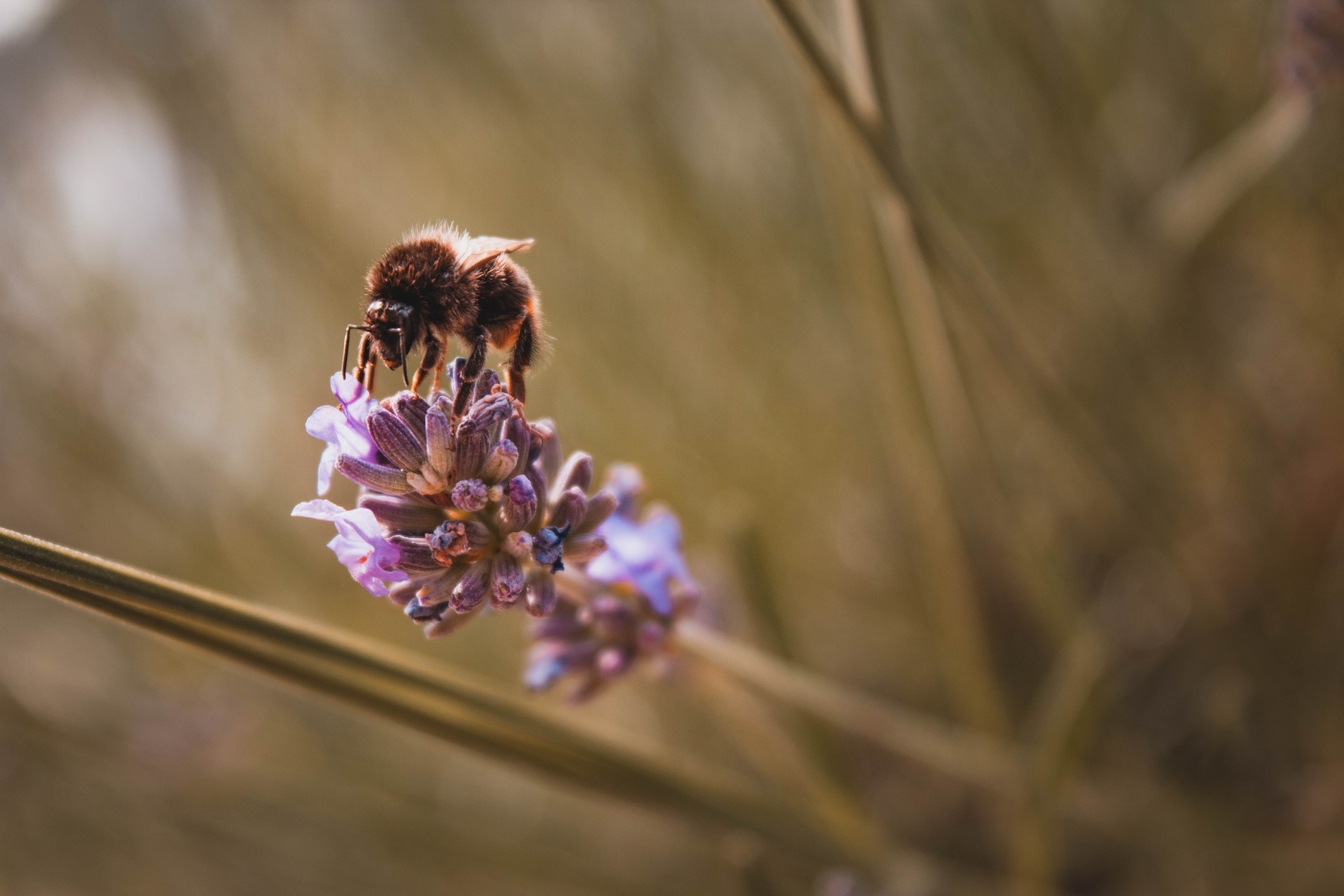 The BeeImage Dataset: Annotated Honey Bee Images   Kaggle