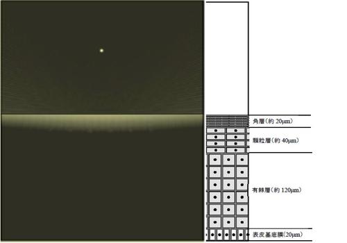 LSPR波長の電界強度分布