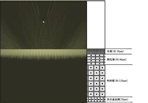 非LSPR波長の電界強度分布