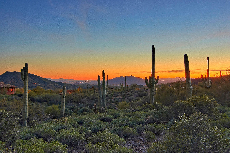 41796 N 99th Way Scottsdale, AZ