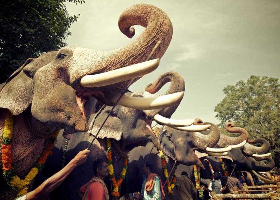 It's Festival Season In Kerala…