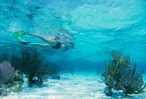 Karma Reef Snorkling