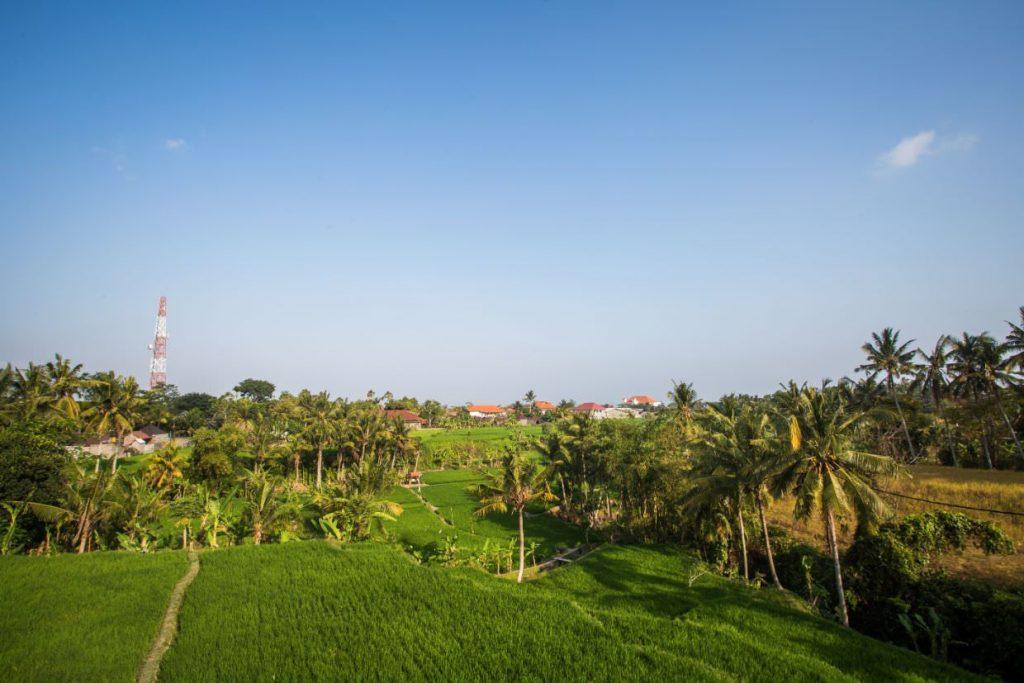 green rice field ofluxury resort Karma Mayura aerial view