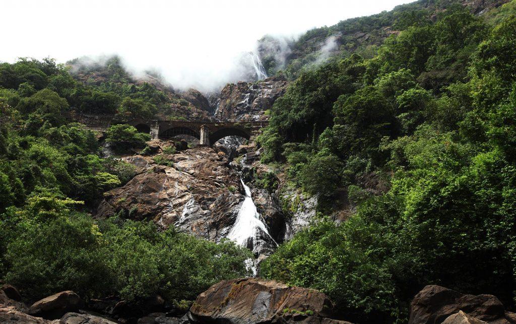 hard green forest of Dudhsagar Waterfalls, Goa