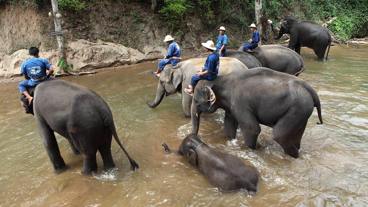 karma Royal Bella Vista's Elephant track adventure