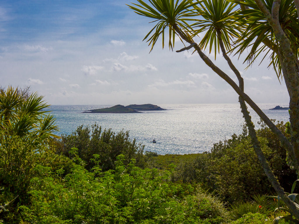 Discover St. Martin's island in Spring - Opening 8th April 2020 Nature and Wildlife