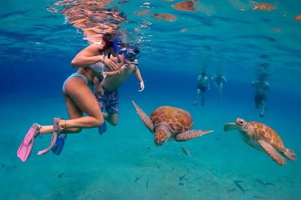 Swim With Turtles at Karma Reef