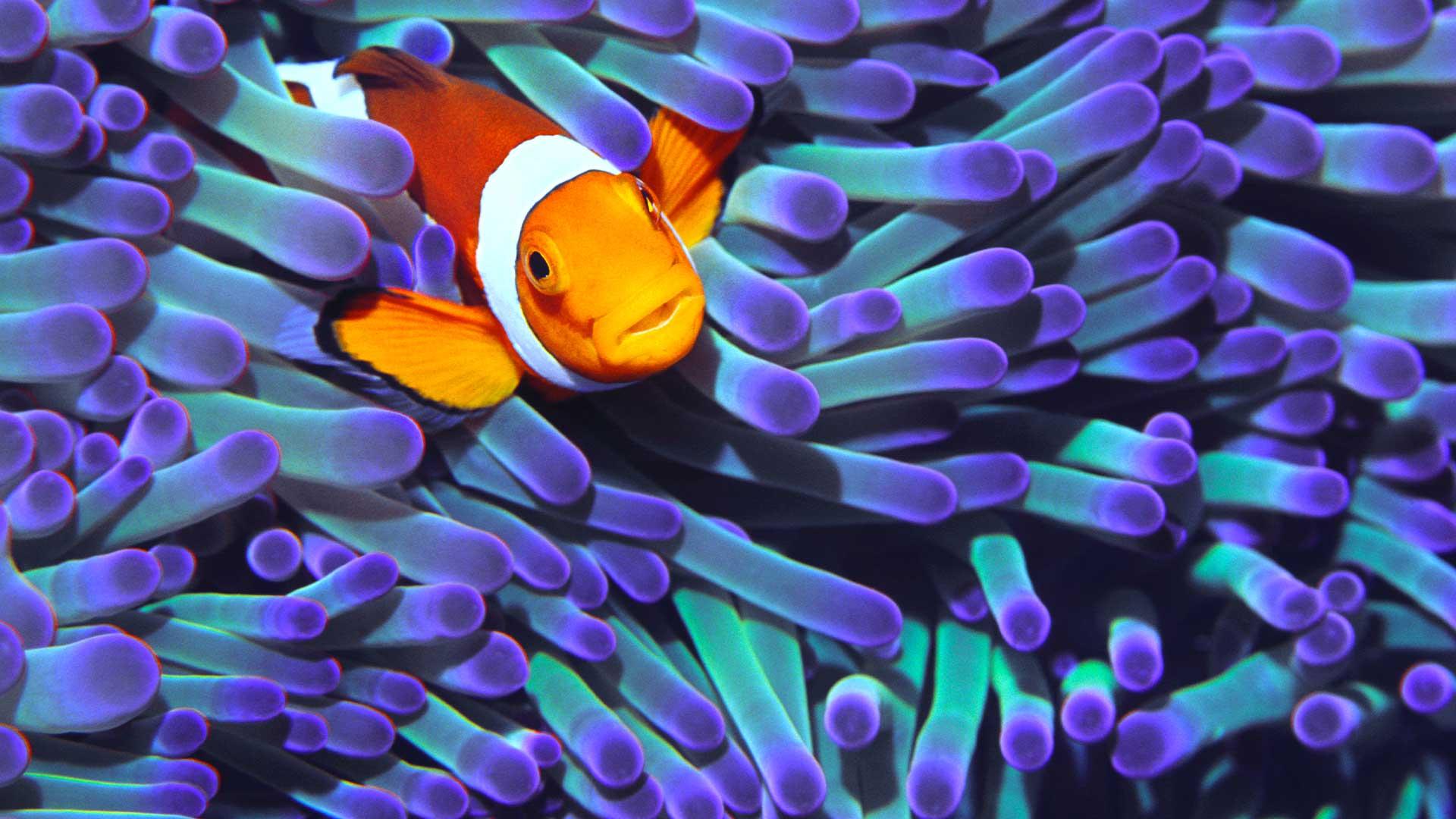 World Reef Day Quiz