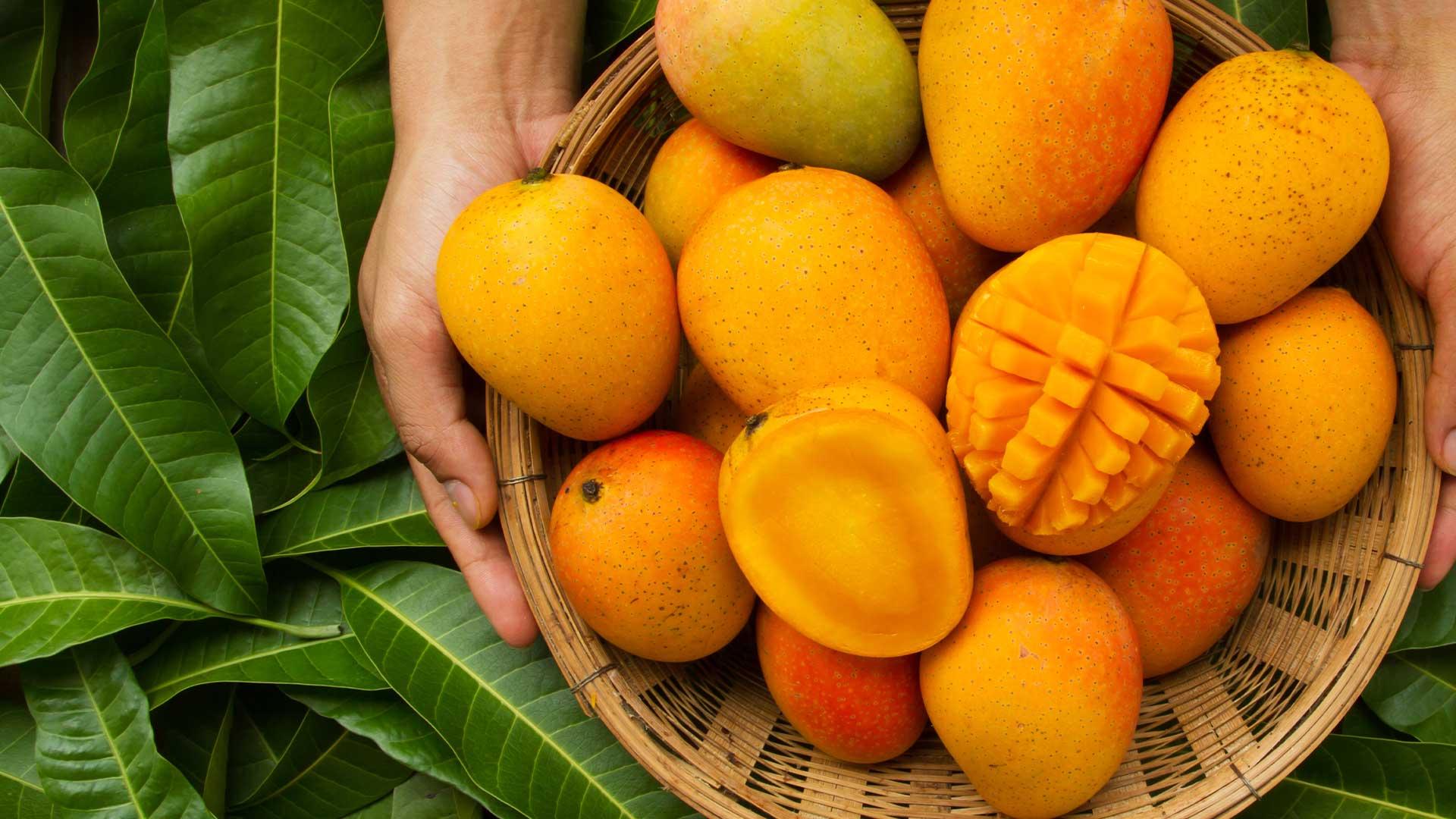 Juicy Quiz : It's Mango Season!