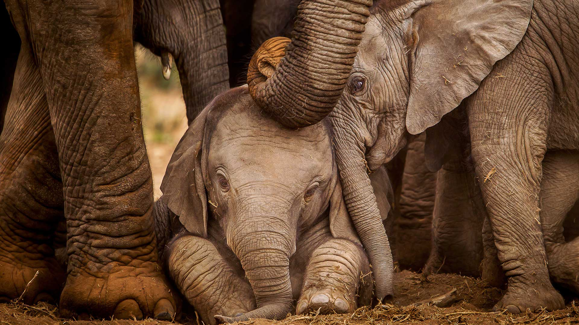 World Elephant Day Quiz : Win a One-Week Vacation