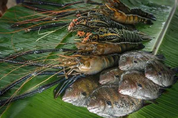 Karma Chakra Kerala Fishing