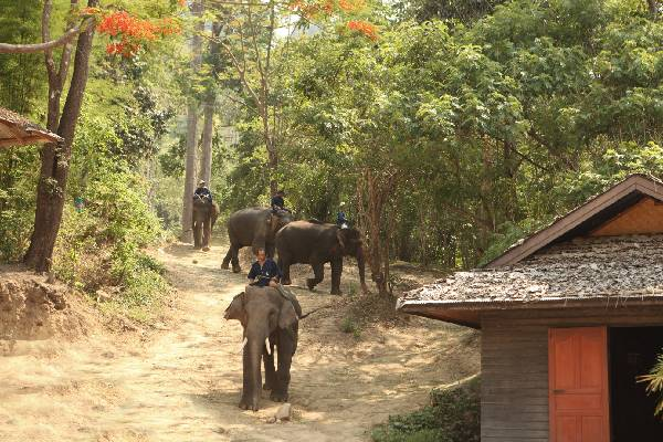 Karma Royal Bella Vista Elephant Trekking