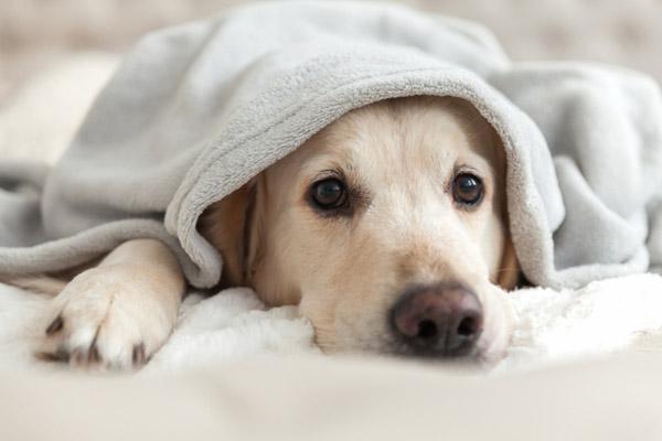 Karma Sanctum on the Green Dog Friendly