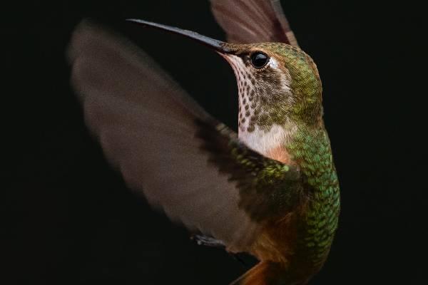 Karma Royal Bella Vista Bird Watching And Tropical Flora And Fauna