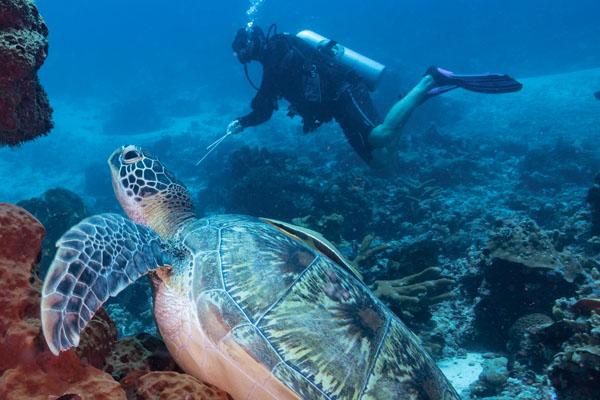 Karma Reef Island Activities