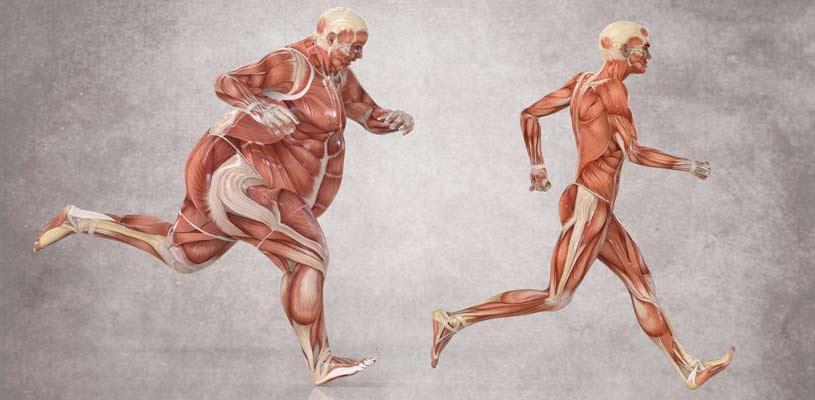 Evolutionen af kroppen