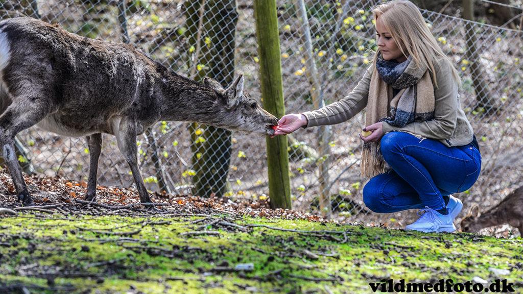 Une femme qui donne à manger à un cerf