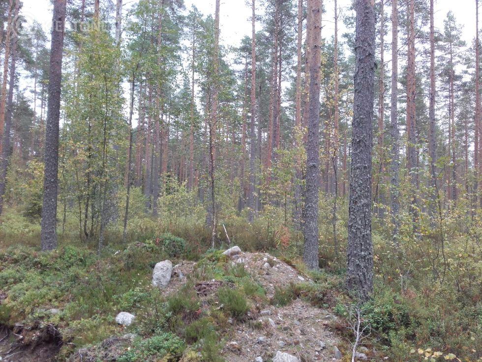Määräala tilasta Kuusiniemi