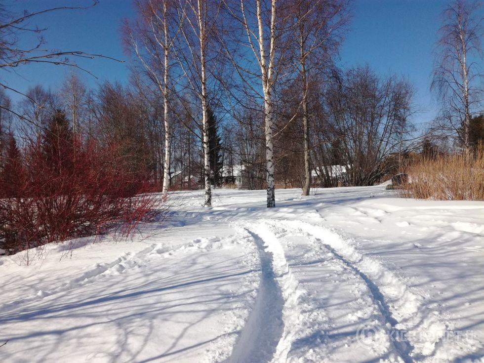 Rantatontti Pappilanrannassa Oulaisissa (tontti nro 4)