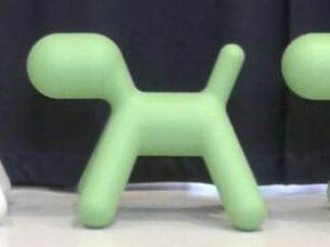 Puppy koira
