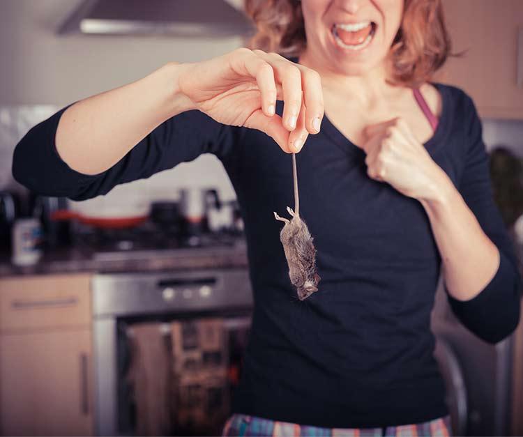 Kodin tuholaiset: hiiri keittiössä.