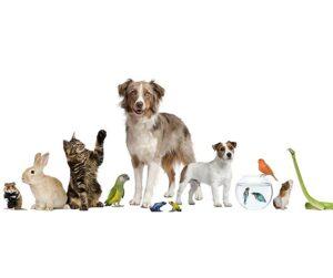 Kuvassa lemmikit koirasta matelijaan.