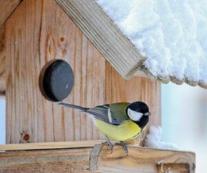 Siisti lintujen ruokintapaikka pitää rotat loitolla.