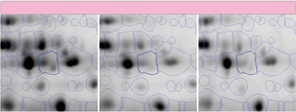 二次元電気泳動画像解析ソフトウェア SameSpots