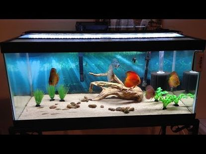 how to breed the glowlight tetra practical fishkeeping 00 00 28