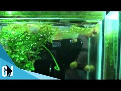 aquarium emersed plants growing under full spectrum led 00 00 3 04